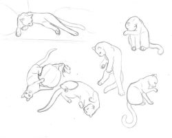 Cat study sketches part 2 by sapphire-blackrose