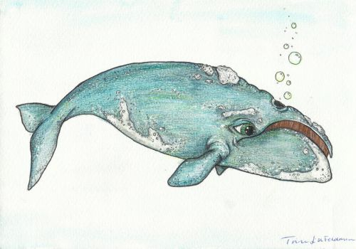 Bowhead Whale by WhimsicalWitch