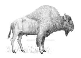 Bison antiquus by Pachyornis