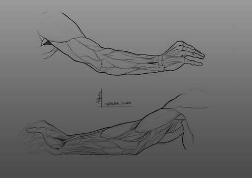 Anatomical Landmarks - Arms by Ambylise