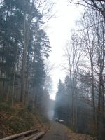 :Torn Forest: by laserCrome