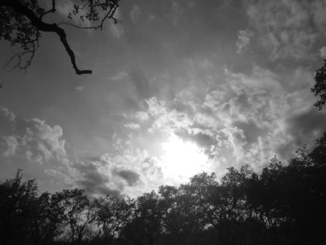 black and white sun and oak by pickurupper