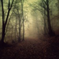 Enchanted Path by Weissglut