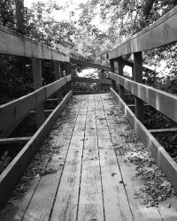 bridge by sscben