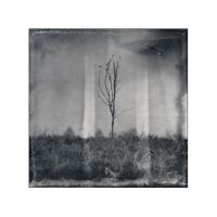 Crows live on dead trees by cameraflou