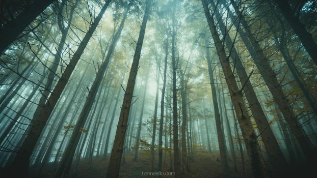 Lost Without by hannes-flo