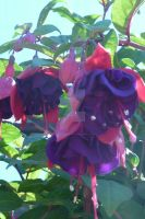 Pink n Purple Flowers -Macro- by Jetta-Windstar