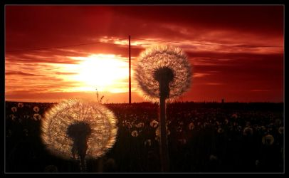 The Dandelion Omens by Metalstorm