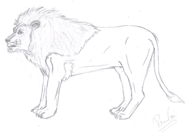 Lion - Another Sketch by pauinhopc