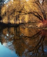Evening Willow Reflection by papatheo