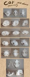 Cat skull reference by Paperiapina