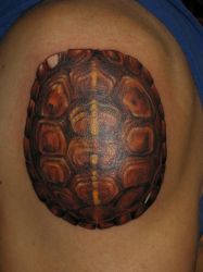 turtle shell by bobeck