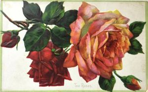 Tea Roses by Yesterdays-Paper