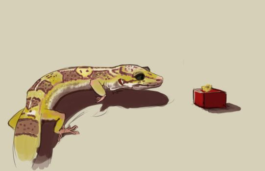 Presents for Leopard Geckos by Luherc