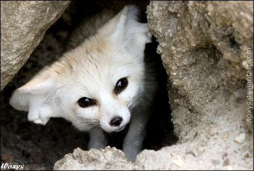 This is my burrow, so get OUT!!! by woxys