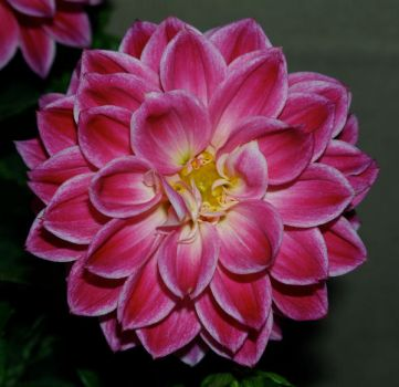 Flower Stock 59 by anbdstock