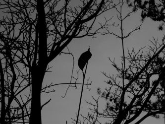 Tall Dark and Lonely by CasperKitty