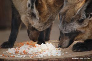 bat eared fox dinner by KIARAsART