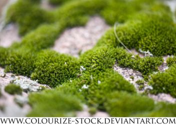 Macro Stock 1 by Colourize-Stock
