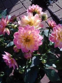 pink and yellowish fowers by midnightjourney