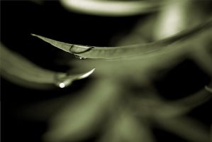 Drops by LucAnthonyRossiter