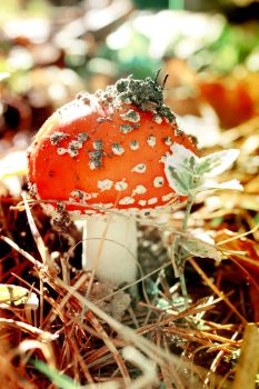 Fly agaric by buzhi