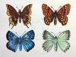 Butterflies study by magdablach