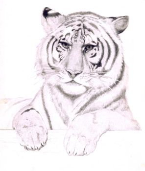 Tiger by billy2toes