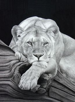 Daydreaming  (Pencil on paper) by StephenAinsworth