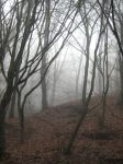 UNRESTRICTED - November '09 - Foggy Forest 2 by frozenstocks