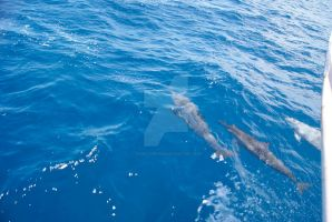 Spinner Dolphins by seancfinnigan