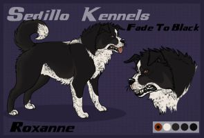 SK's Fade To Black: Roxanne by Sedillo-Kennels
