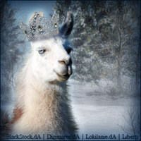 Stable Avatar ~ Llama Quessn by Liberty-Designs