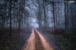 Road deep in the forest by NorbertKocsis