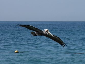 Coming In For a Landing by KMourzenko