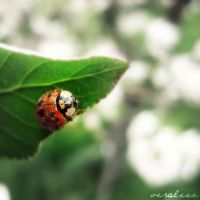 a ladybug by veraleee