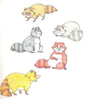 Funny Raccoons by Dead-Raccoons