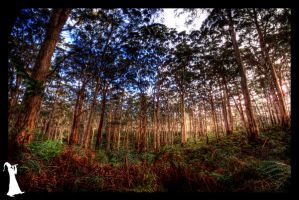 A Forest - 1 by MalcomX
