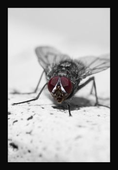 fly 2 by Bizzio