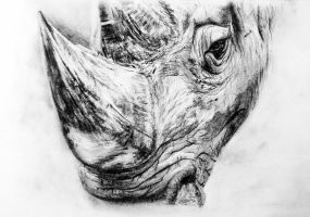 Rhino in charcoal by AnastasiaKorikova
