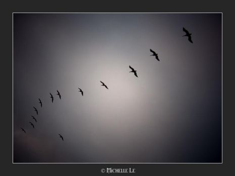 birds in the sky by OhsnapItsMchle