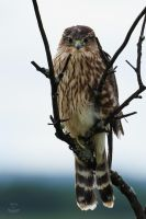 Merlin-Drying Out by JestePhotography