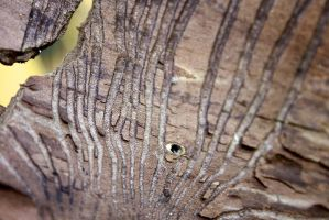 Tree Bark by Hazza42