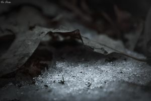 Beauty In The Dead Of Winter by EveVictus