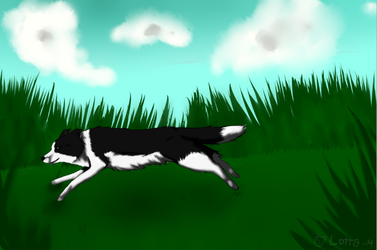Tried to draw bordercollie by Greisikoira