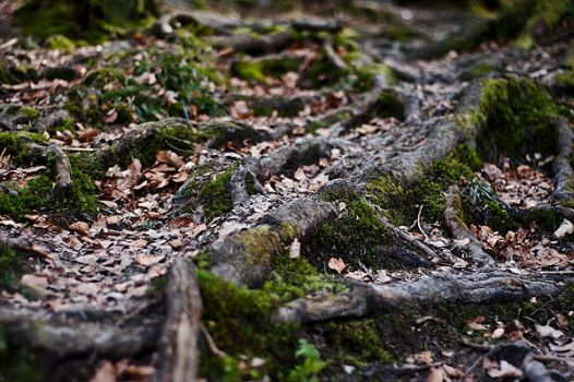 roots in the wood by HateCrewGirl