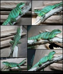 Chinese Water Dragon Stock Pack by Esmeralda-stock