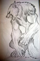 werewolf drawing 3 by tribalwolfie