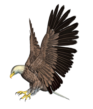 Eagle 02 PNG Stock by Roy3D