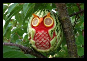tropic-owl by VastandInfinite